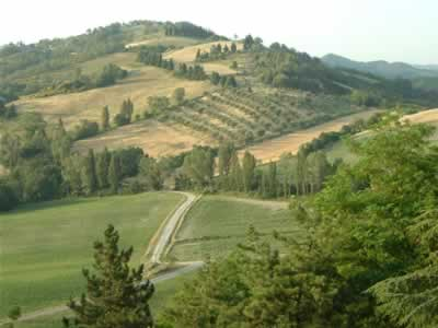 Grapes and Olives can be seen growing in the background on the rolling hills of Umbria.
