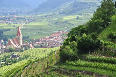Steep Gruner Veltliner vineyards overlook some of the most picturesque villages in Europe.